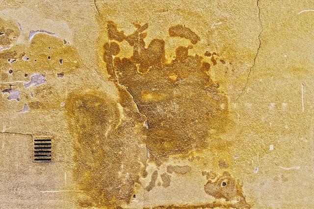 zeď s plísní